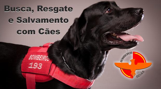 banner operações com cães