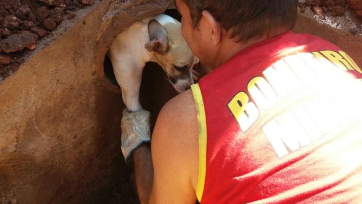 Resgate de Cadela em Goiatuba (10)