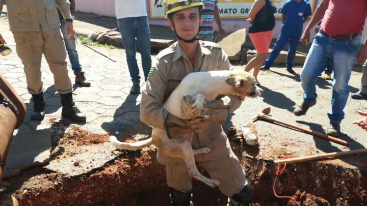 Resgate de Cadela em Goiatuba (4)