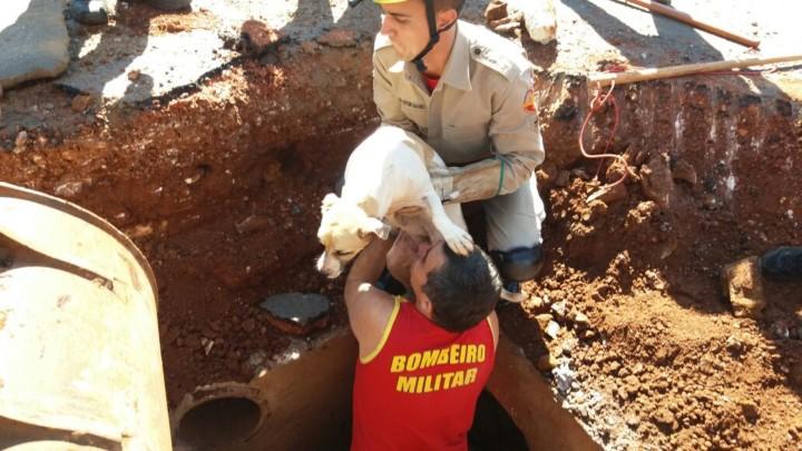 Resgate de Cadela em Goiatuba (6)