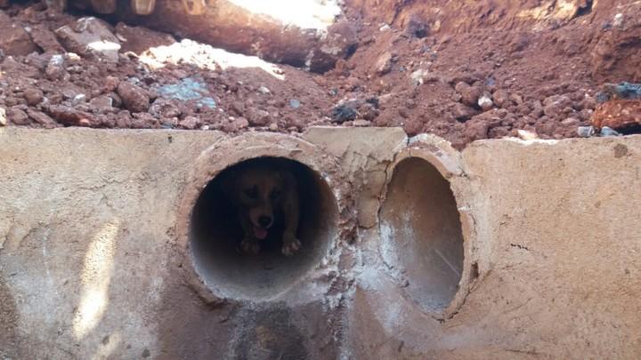 Resgate de Cadela em Goiatuba (7)
